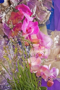 Orchids-study-in-colour-art fine photography