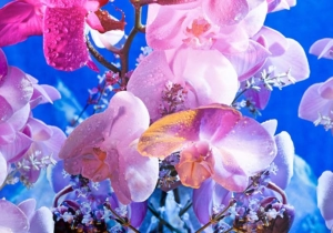 orchids-study-in-colour art fine photography