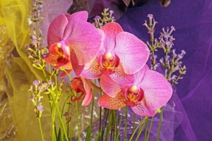 Orchids-study-in-colour by FionaT